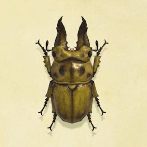 【あつ森】離島では数匹くらいしか虫が存在できない?【あつまれ どうぶつの森】